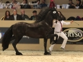 IMG_2740-028_Keimpe_vd_Demro_Stables