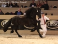IMG_2742-028_Keimpe_vd_Demro_Stables