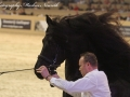 IMG_2754-028_Keimpe_vd_Demro_Stables