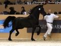 12681472-176-Rob-van-de-Demro-Stables
