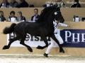12969984-176-Rob-van-de-Demro-Stables